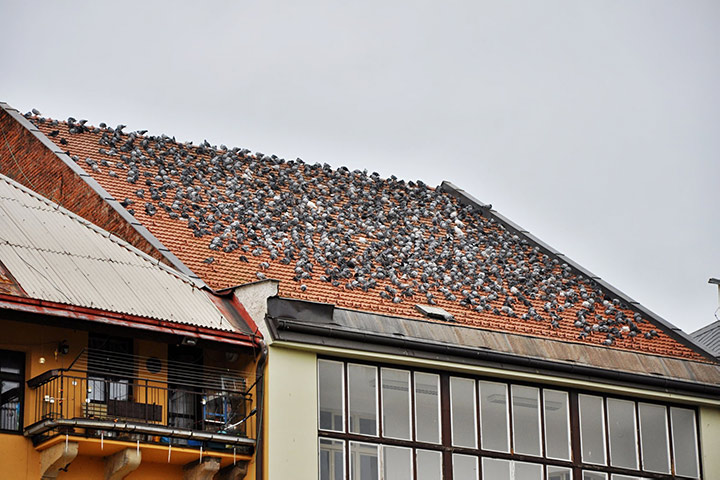 A2B Pest Control are able to install spikes to deter birds from roofs in Islington.