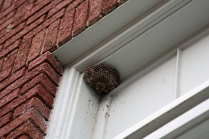 We provide a wasp nest removal service for domestic and commercial properties in Islington.